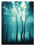 Blue Light Woods