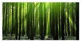 Green Woods 3