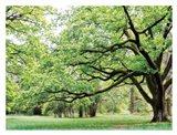 Green Woods 4