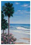 Calm Tropics