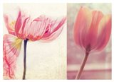 Poppy & Tulip