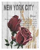 New York Roses