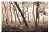 Reticent Woods