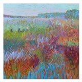 Color Field No. 71
