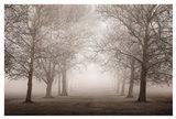 Layers of Trees II