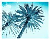 Chic Palms