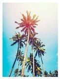 Palms in the Sun