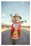 Hedgehog Traveler