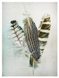 Owl - Guinea Feathers