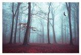 Solstice in Fog