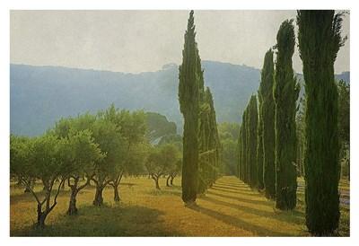 Cypress Shadows Poster by Lars Van De Goor for $85.00 CAD