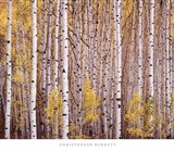 Aspen Grove, Colorado