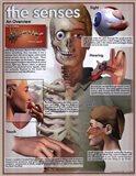 Five Senses Overview