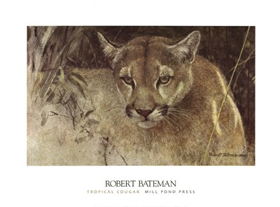 Tropical Cougar Poster by Robert Bateman for $30.00 CAD