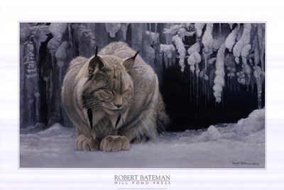 Dozing Lynx (detail) Poster by Robert Bateman for $56.25 CAD