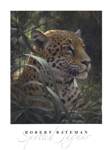 Symbol of the Rainforest (detail) Poster by Robert Bateman for $50.00 CAD