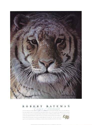Tiger Portrait Poster by Robert Bateman for $52.50 CAD