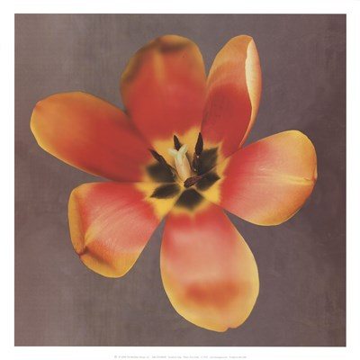 Sunshine Tulip Poster by Erin Clark for $20.00 CAD