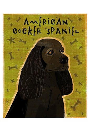 American Cocker Spaniel (black) Poster by John W. Golden for $20.00 CAD