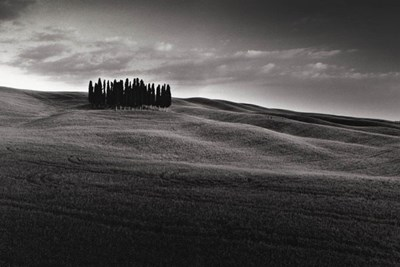 Cypresses and Rolling Hills Poster by Michael Hudson for $32.50 CAD