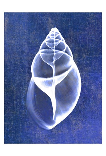 Achatina Shell (indigo) Poster by Bert Myers for $20.00 CAD