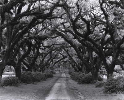 Path In The Oaks #2, Louisiana Poster by Monte Nagler for $16.25 CAD