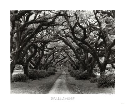 Path In The Oaks #2, Louisiana Poster by Monte Nagler for $32.50 CAD