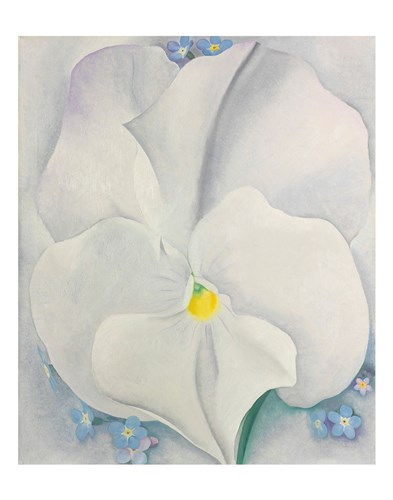 White Pansy Poster by Georgia O'Keeffe for $16.25 CAD