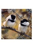In the Black - Black Capped Chickadees (detail)