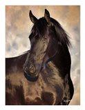 TBD (black horse)