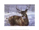 Through My Window- Whitetail Deer