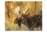 Autumn Moose Study #1