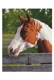 Shotzie - Horse Portrait
