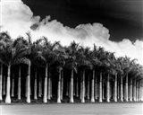 White Palms, Costa Rica