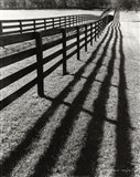Fences And Shadows, Florida
