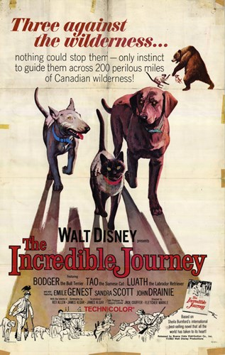 The Incredible Journey Poster by Unknown for $26.25 CAD