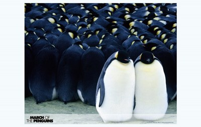March of the Penguins Together Poster by Unknown for $26.25 CAD