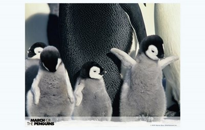 March of the Penguins Babies having Fun Poster by Unknown for $26.25 CAD