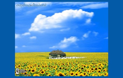 Everything is Illuminated - flower field Poster by Unknown for $26.25 CAD