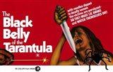 Black Belly of Tarantula