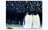 March of the Penguins Together