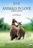 Animals in Love - Kangaroos