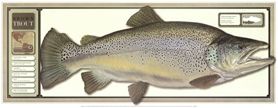 World Record Brown Trout Poster by Unknown for $27.50 CAD