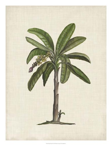 British Palms II Poster by Naomi McCavitt for $68.75 CAD