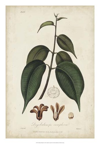 Medicinal Botany IV Poster by Churchill for $56.25 CAD