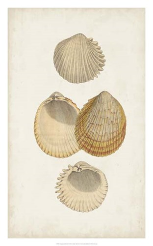 Antiquarian Shell Study II Poster by Vision Studio for $81.25 CAD