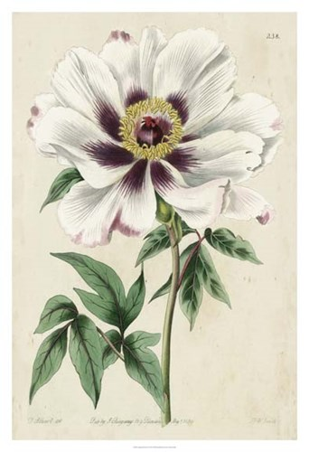 Imperial Floral II Poster by Vision Studio for $131.25 CAD
