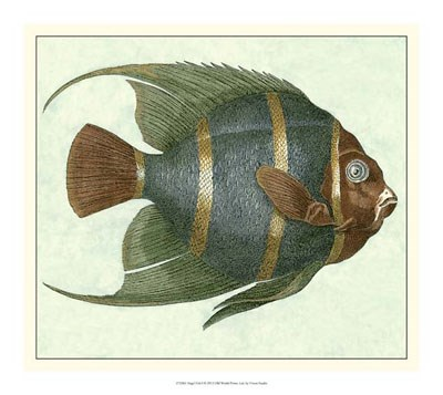 Angel Fish I Poster by Vision Studio for $37.50 CAD