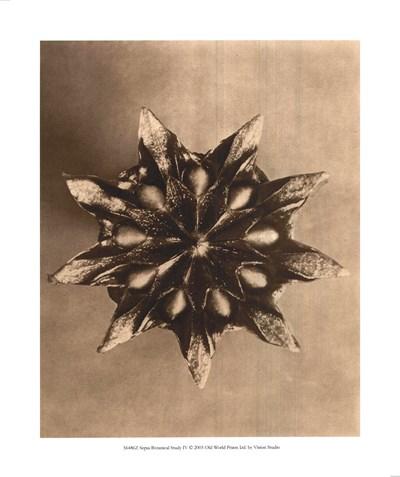 Sepia Botany Study IV Poster by Karl Blossfeldt for $15.00 CAD