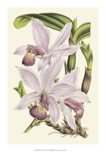 Delicate Orchid I Poster by Vision Studio for $37.50 CAD